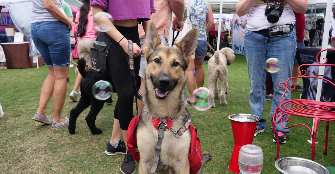 "Pet Alliance of Greater Orlando Hosts Orlando's Largest Annual Pet Festival And Parade ""Paws In The Park"" At Lake Eola Park On Saturday, February 8"
